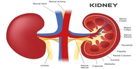 Kidney Patient Education:  A Lost Art, or Just Rarely Seen?