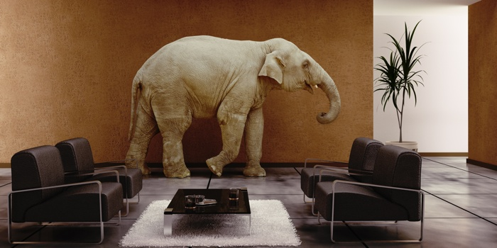 Home Hemodialysis vs. Transplant: The Elephant in the Room