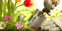 Planting the Seeds for Patient Centeredness: Tips for Your Home Dialysis Training Program